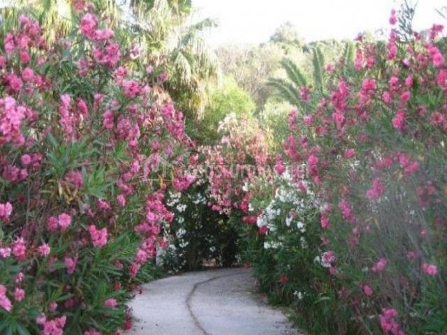 Vistas de los exteriores con caminos y flores