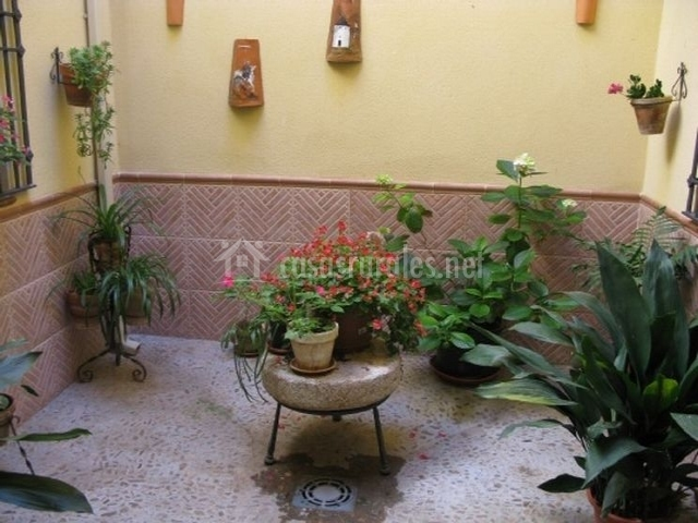 Patio interior con distintas plantas