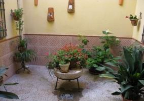Patio interior con distintas plantas