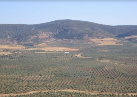 Zona de olivares