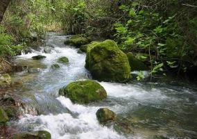 Riachuelo por el Parque Natural de Sierra de Grazalema