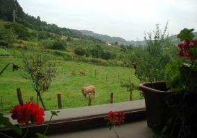 Vista desde el porche