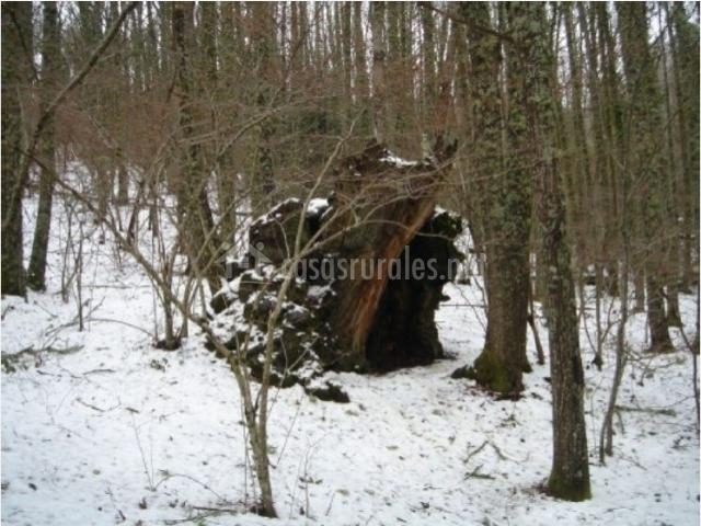 Bosque honfr a en linares de riofrio salamanca - Casa rural linares de la sierra ...