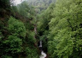 Bosque de hayas que forma parte del Parque Natural de Saja Besaya