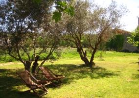 Sillas y jardín