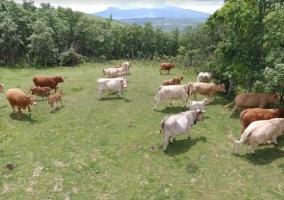 Vistas de la granja.jpg