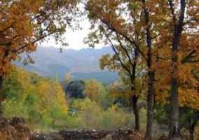 Zona de bosques y colorido