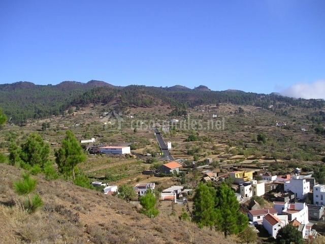 Monte de pino canario