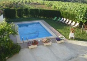 Tumbonas junto a la piscina para tomar el sol
