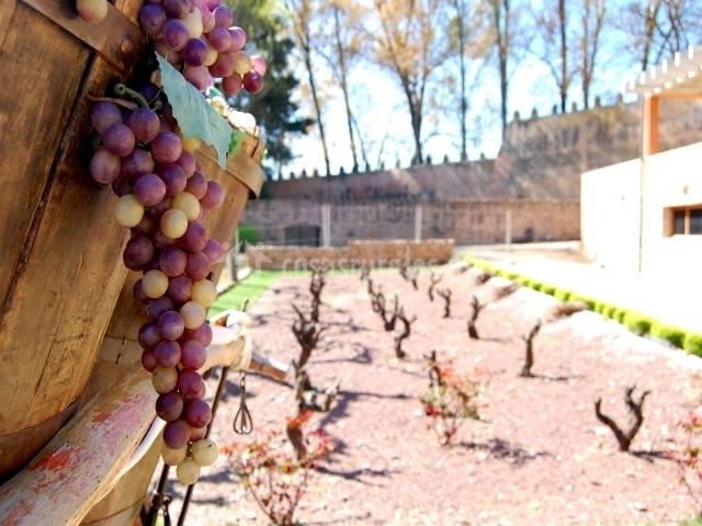 Campo de Borja, Museo del Vino