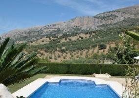 Piscina con vista a los olivos