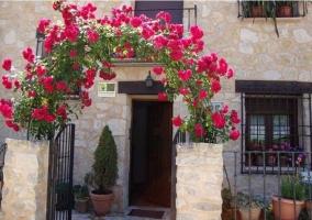 Rosales a la entrada de la casa