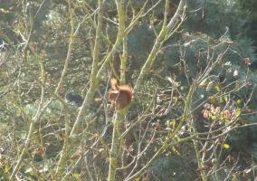 Ardilla en árbol
