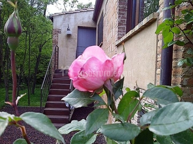 Flor rosa con escaleras