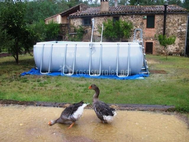 Ocas y piscina