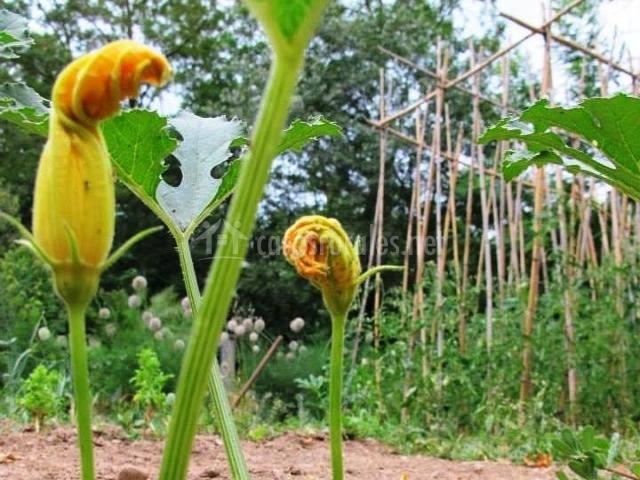 Plantas del huerto