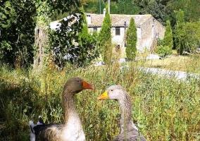 Animales con fachada de la casa