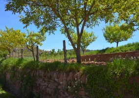 El huerto con muro de piedra