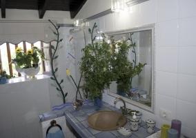 Aseo con lavabo y plantas de adorno