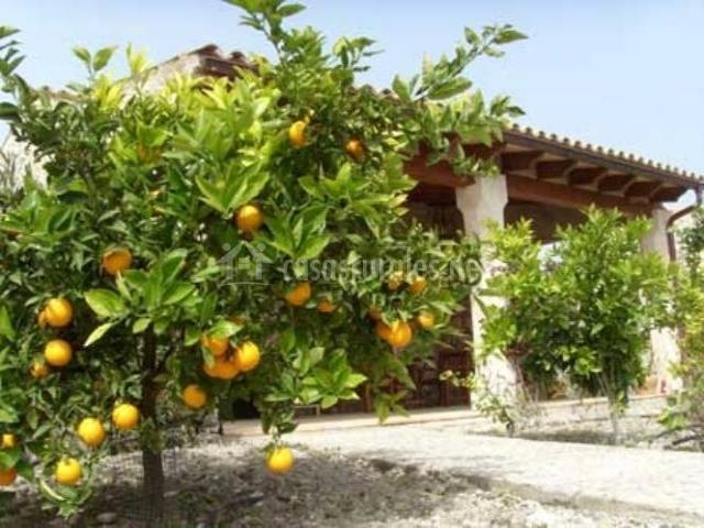 Patio con árbol de fruta