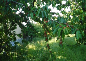 vistas a los cerezos