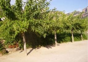Vegetación de la finca de la casa rural catalana