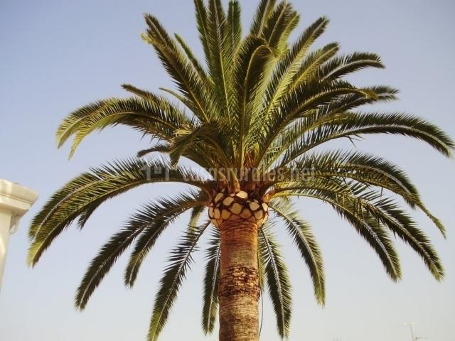 La casa de la palmera en albuixech valencia - La casa de las palmeras ...