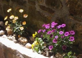 Flores en el precioso jardín