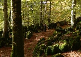 Parque Natural de Urbasa-Andía