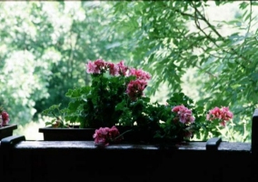 Flores del jardín que rodea a la casa
