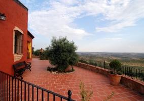 Terraza con olivos