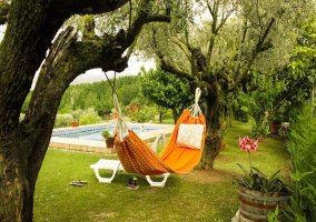 Hamaca entre árboles al lado de la piscina
