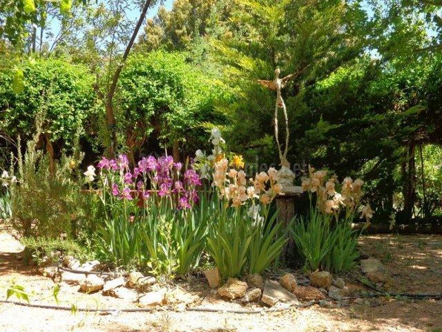 Jardín con lirios