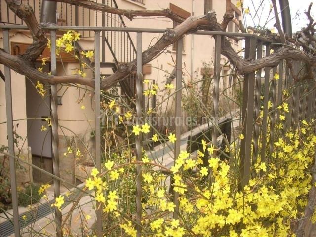 Nuestra fachada y jardín