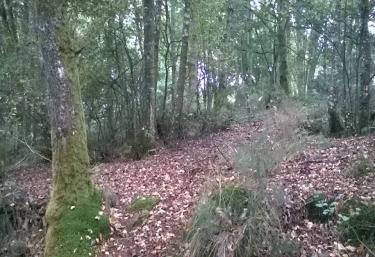 Bosque cercano a la casa