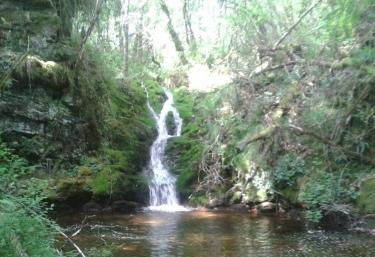 Cascada en precioso bosque