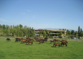 Casa Guadarnés- Yeguada Senillosa
