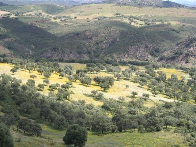 La solana casas rurales en aracena huelva - Casas rurales sierra de aracena ...