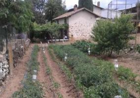 Huerto ecológico junto a la vivienda