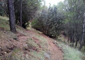 Ruta Castillejos