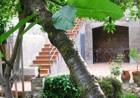 Tronco árbol en el jardín
