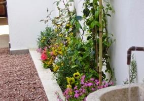 Vegetación junto a la fuente en la parte exterior de la vivienda
