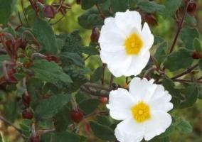 Vistas de las flores que dan nuestros árboles