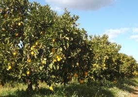 Vistas de los naranjos en la finca