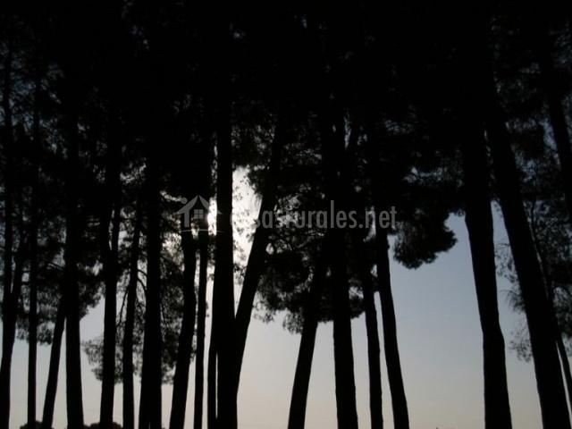 Vistas del pinar