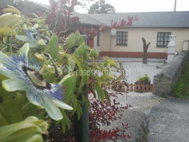 Vistas de los exteriores con muchas flores
