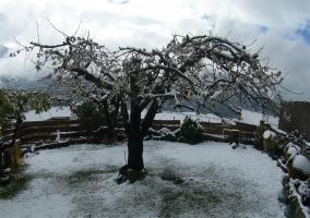 jardín invierno