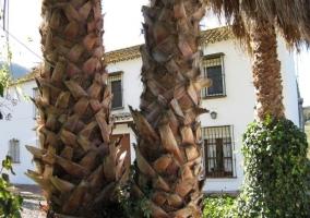 Acceso a la vivienda y lateral con zona de barbacoa