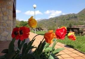 Vistas de laas zonas exteriores repletas de plantas