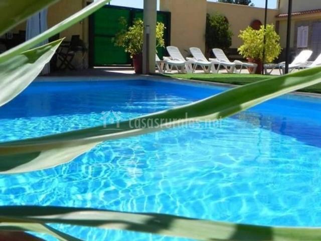 Vistas de la piscina con plantas alrededor